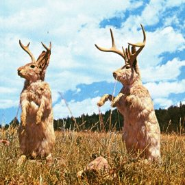 JACKALOPES – FACT OR FICTION?