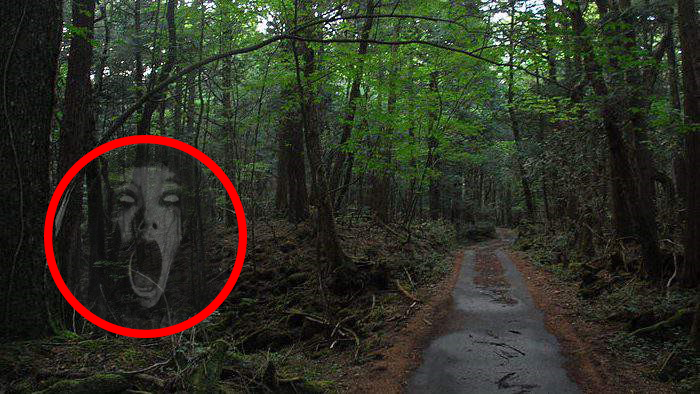 Aokigahara: The Suicide Forest of Japan
