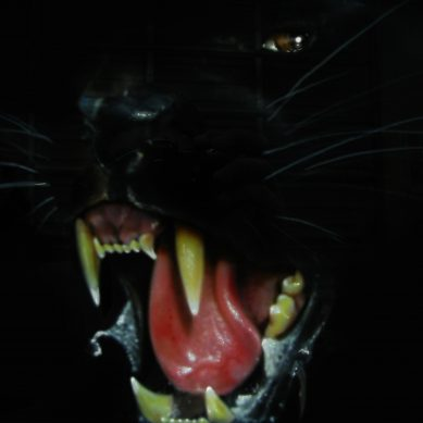 The Wampus Cat – Half-Woman, Half-Cat Creature